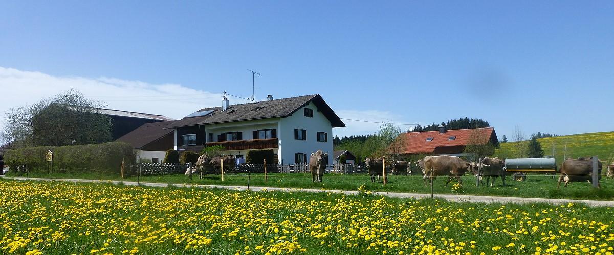 Herzlich willkommen auf dem Biohof Landhaus Klöck