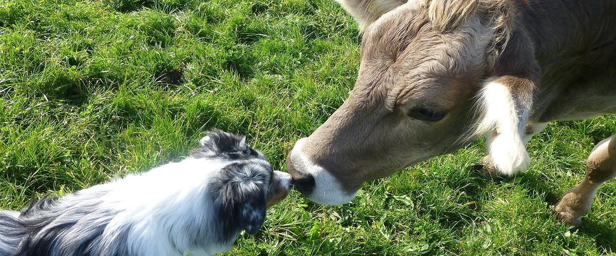 Jasper küsst Schumpen