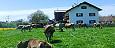 Urlaub auf unserem Bio-Bauernhof